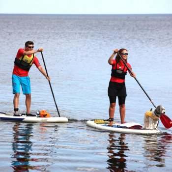 Go paddleboarding under the guidance of SUP Siniaalto