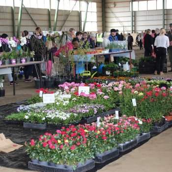 Profusion of flowers at the Garden Fair